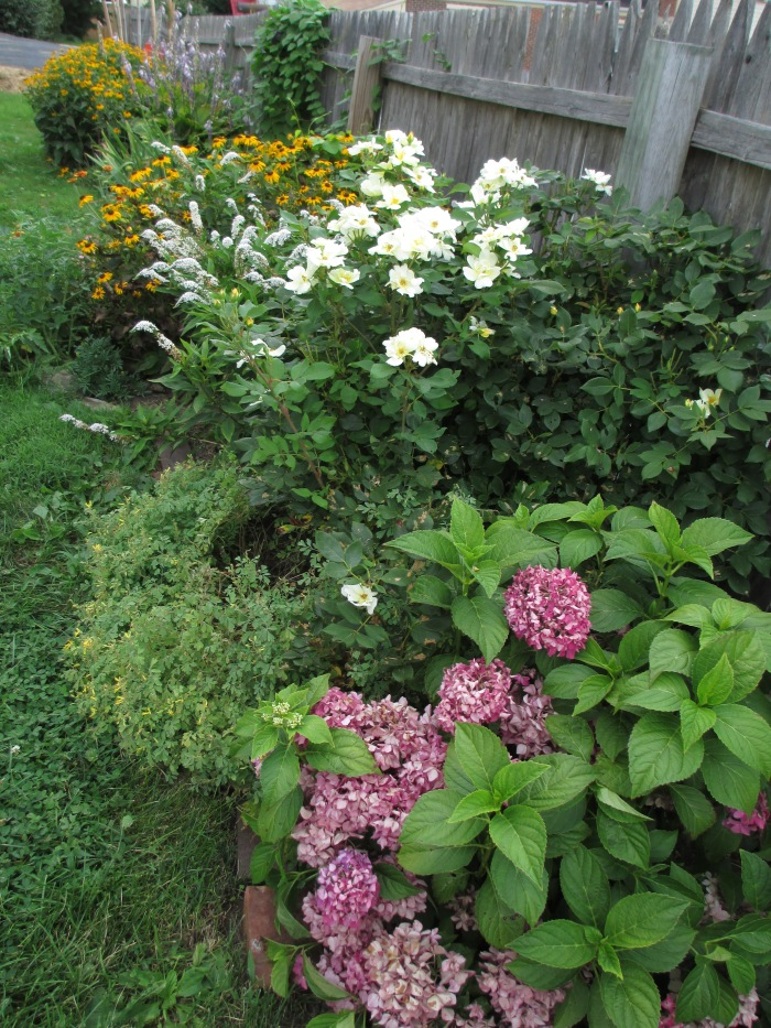 Roses, hydrangea, black-eyed susans