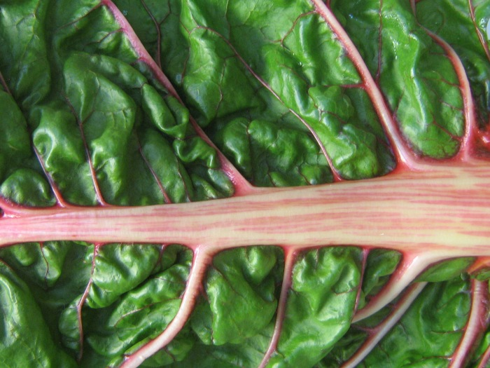 Beautiful swiss chard